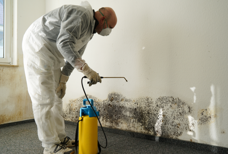 Mold Inspection and Removal